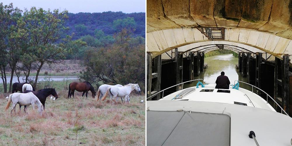 Cavalli della Camargue e Ouvrages du Libron