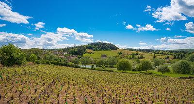 Vigneti in Borgogna