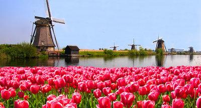 Mulini a vento nei campi di tulipani