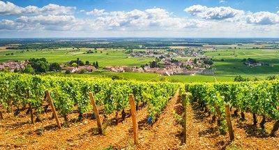 Vigneti nella valle della Loira Nivernais