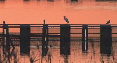 Uccelli al tramonto