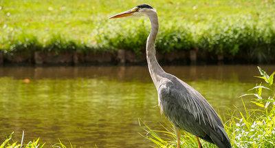 Individuare la fauna selvatica sul Rideau