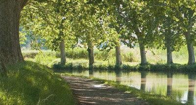 Alberi lungo il Canal du Midi