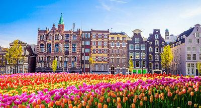 Campi di tulipani ad Amsterdam
