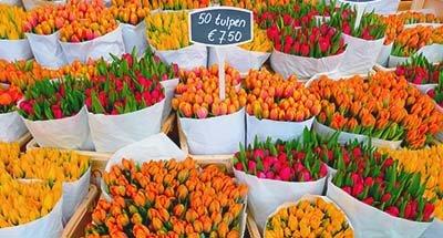 Tulipani in un mercato, Paesi Bassi