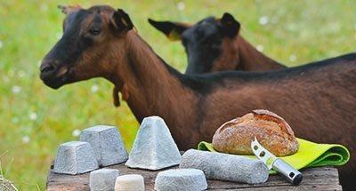 Capre e formaggio