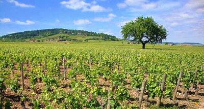 I vigneti della Borgogna: le cantine della Côte de Beaune