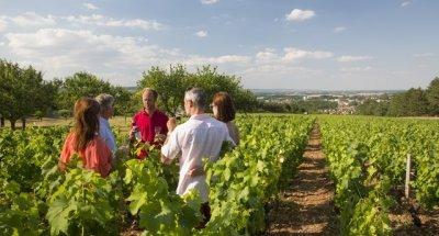 Degustazione di vini in Borgogna Franche-Comté