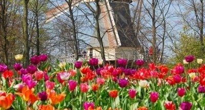 andare al Festival dei tulipani ad Amsterdam