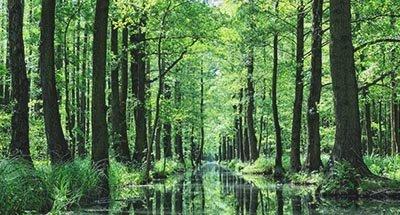 Foresta della Sprea (Spreewald) in Brandeburgo