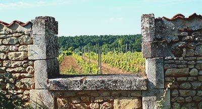 Vigneto e casa antica, Charente