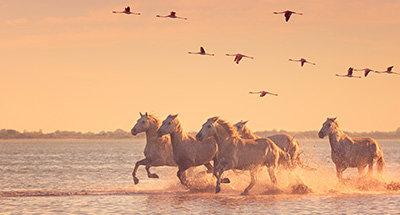 Cavalli selvaggi e fenicotteri al tramonto