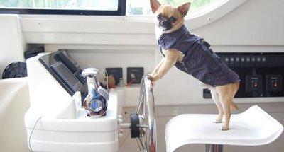 Suggerimenti per una vacanza in compagnia del vostro cane