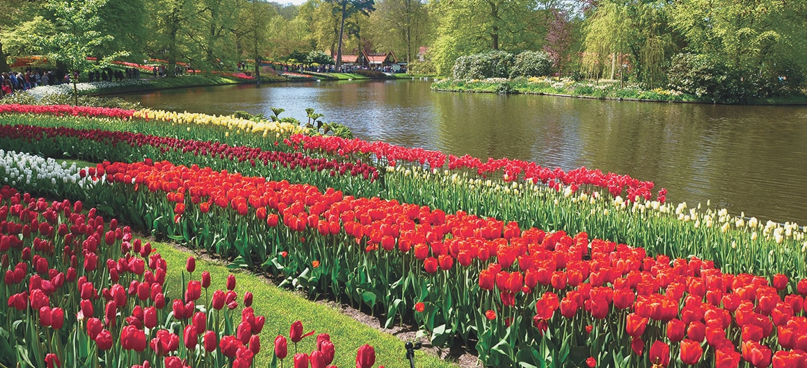 Tulipani di Keukenhof, Lisse, Paesi Bassi
