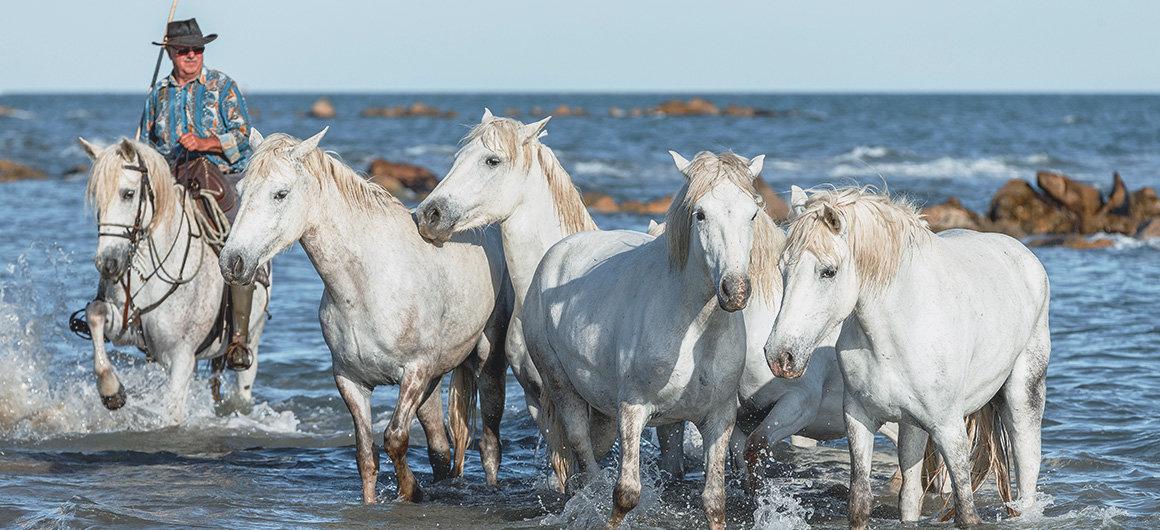 Cavalli bianchi sulla spiaggia