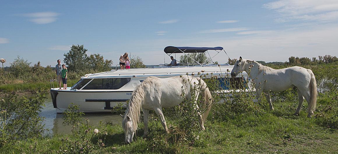 Barca Vision e cavalli selvaggi