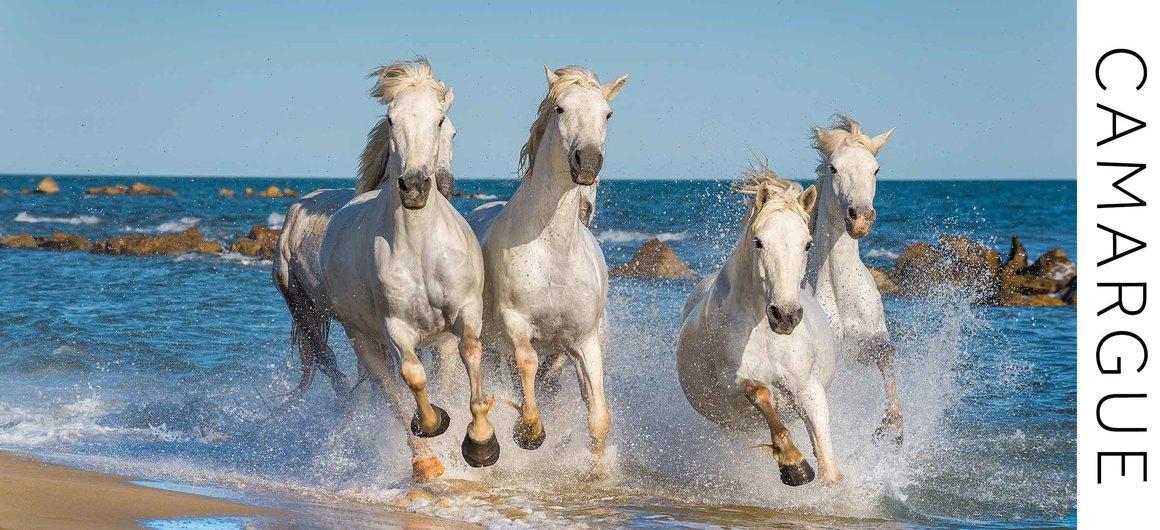 Cavalli di Camargue sulla spiaggia